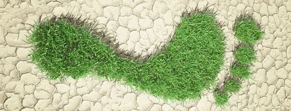 Grass Foot