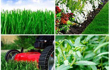 Greenprint Landscapes Image - Care